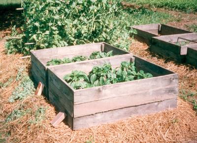 Build Cold Frames organic short season self sufficient garden Sue