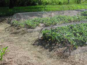 Frugal Gardening Penniless Parenting