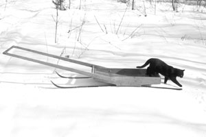 How to Make Your Own Homestead Freight Sleds by Sue Robishaw